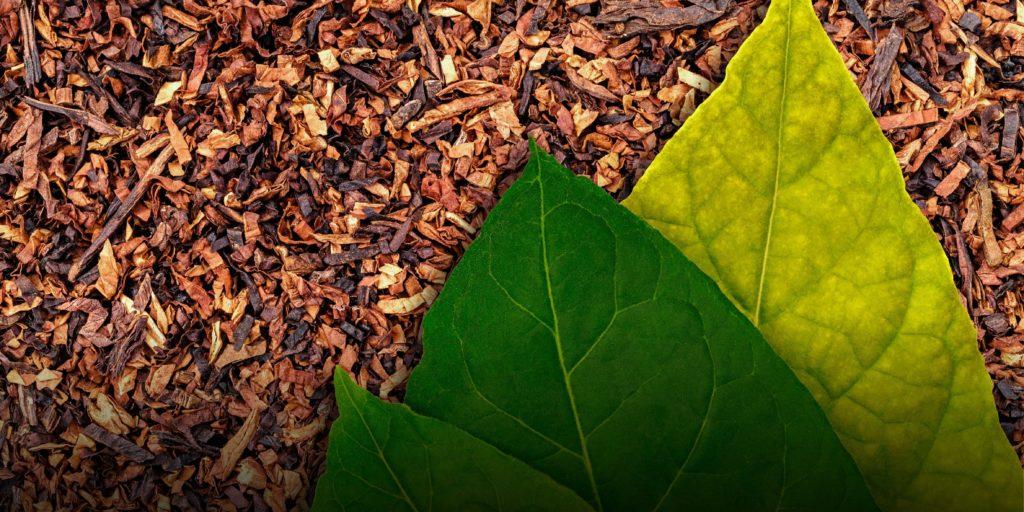 Экспорт табачных изделий россии цены на табачные изделия в 2021 году