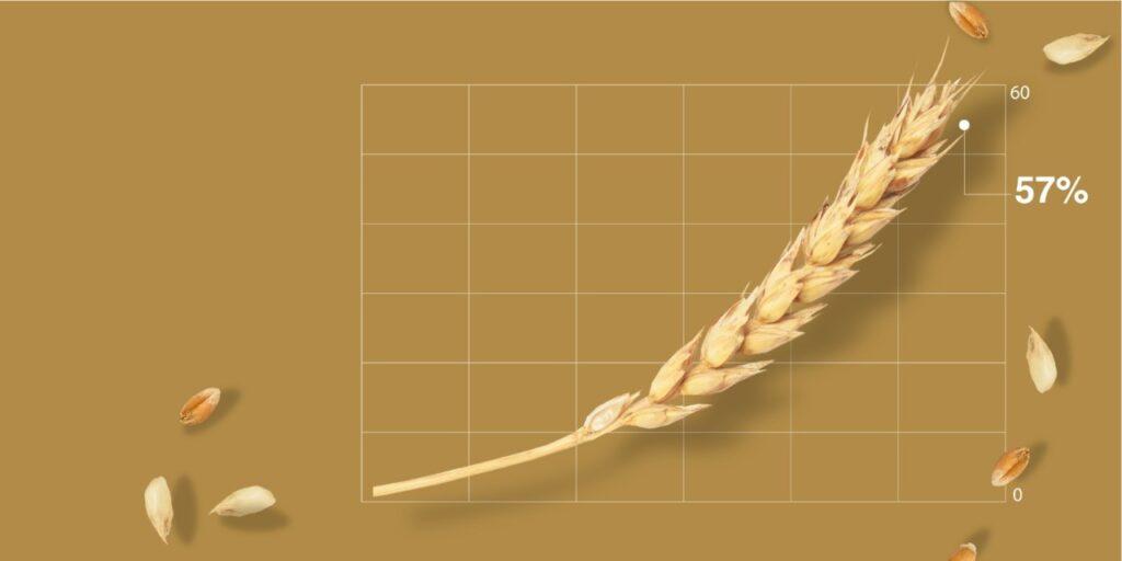 Российский экспорт пшеничных отрубей вырос на 57%